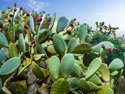 Cactus field in Mexico City.