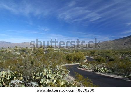 Cactus Forest Road, Saguaro National Park, Arizona