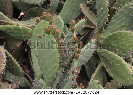 Cactus Growing in Forest Free Photo - Avopix com