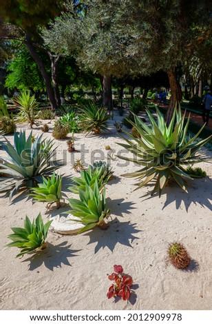 Cactus garden near the Shrine of the Báb at Bahai Gardens, Haifa, Israel Stock fotó ©