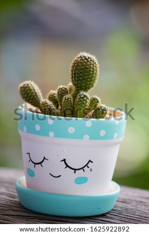 Cactus helps purify the air Planted plants help the weather better. a succulent plant with a thick, fleshy stem that typically bears spines, lacks leaves, and has brilliantly colored flowers.