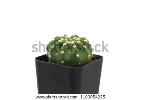 Cactus in a black pot on a white background. Cactus is a small tree used to decorate and decorate both the bedroom and the office. Can be placed near the computer screen. #1100054225