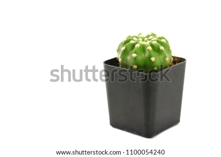 Cactus in a black pot on a white background. Cactus is a small tree used to decorate and decorate both the bedroom and the office. Can be placed near the computer screen. #1100054240