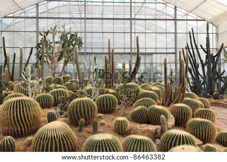 cactus in a conservatory Glasshouse