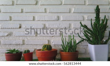 Cactus in plain containers with brick wall. #562813444