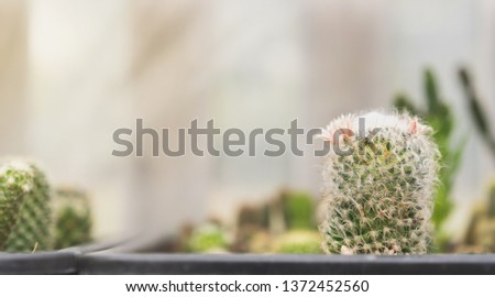 Cactus in planting pots with copy space, copy space concept