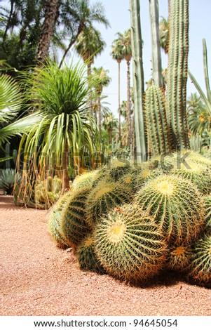 Cactus in the desert park