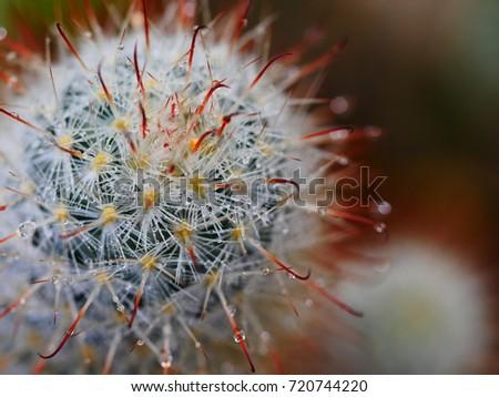 cactus in the garden #720744220