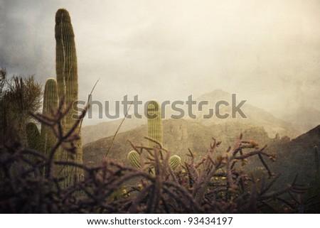 Cactus in the rugged Arizona terrain outside of Tucson - stock photo