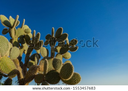 Cactus in the sculpture and cactus Park in Ayia NAPA, Ciprus. Stock fotó ©