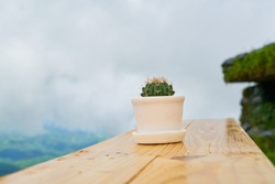 Cactus in White Plant Pot with Clouded Background at Pha Chang Mub, Doi Tung, Mae Sai, Chiang Rai