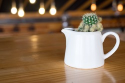 Cactus in white vase on wooden table