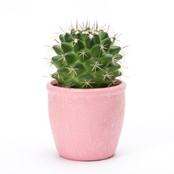 Cactus isolated on white background. Aloe and other succulents in colorful ceramic pot.