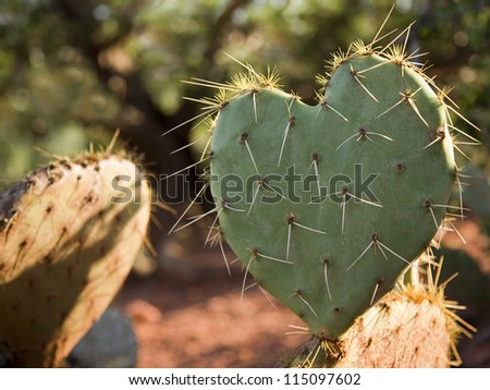 Cactus Leaf in the Shape of a Heart (rim lighting)