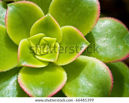 Cactus Macro with Vivid Texture and Color; Great for Desert Backgrounds