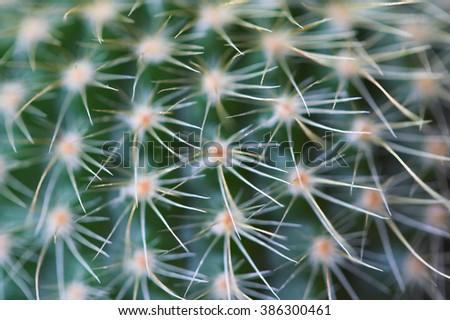 cactus needle hook closeup Stock fotó ©