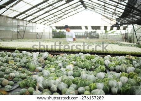 Cactus nursery #276157289