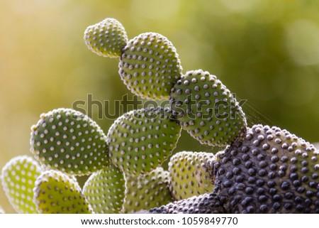 cactus of the exotic garden of Monaco #1059849770
