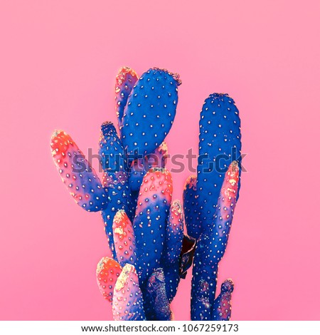 Cactus on pink.