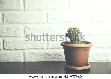 cactus on table   in brick wall background #431977960