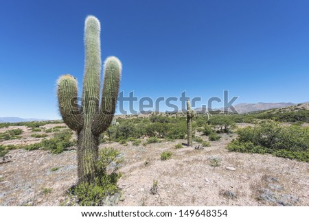 Cactus on the colourful valley of Quebrada de Humahuaca in Jujuy Province, northern Argentina. #149648354