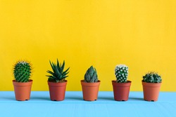 Cactus on the desk with yellow wall and minimal style