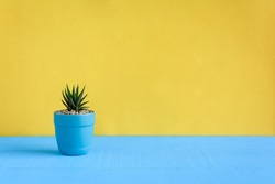 Cactus on the desk with yellow wall background and color pastel style