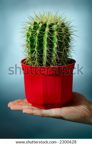 cactus on the hand