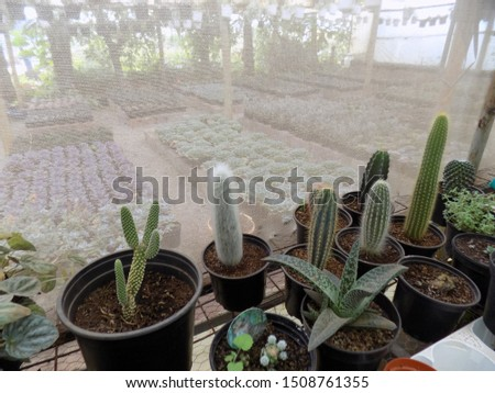 cactus plant for indoor gardening, indoor house decorations and natural art