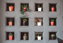 Cactus planted in a pot, placed in Multi-compartment shelves