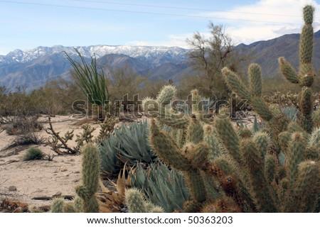 Desert Plants Cactus. stock photo : Cactus plants in