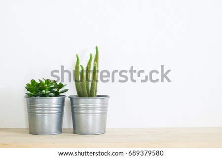 cactus pot in room decoration at home with copy space for your text - Shutterstock ID 689379580