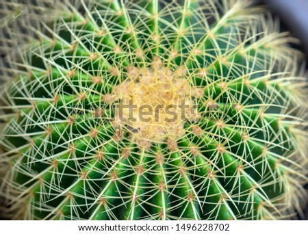 Cactus species with different species are blooming, this is a species of plants living in hot weather, drought symbolizes endurance endurance of humans before nature.