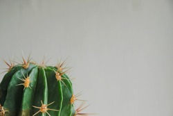 Cactus thorns on a gray background. Cactus fragment. Selective focus. Free space. Copy space. Minimalism.