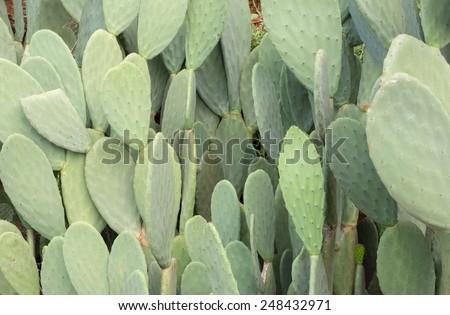 cactus tree #248432971