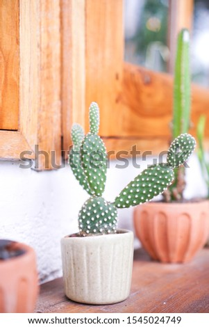 Cactus trees in pots Variety of varieties, decorated on a shelve.
