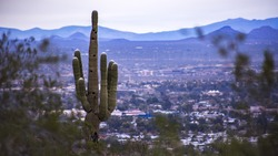 Cactus with a view of the city
