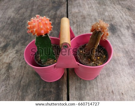 Cactus with orange  flower in pretty little small cute pot on wooden table.(dead and alive) #660714727
