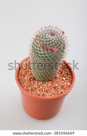 cactus with pot on white background #381046669