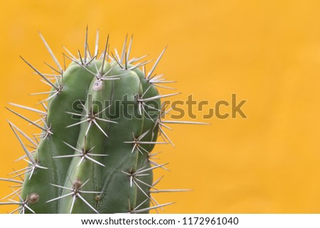Cactus with sharp thorns,copy space.