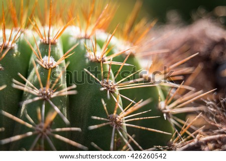 Cactus with sprouting colors in dreamy setting #426260542