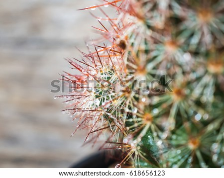 Cactus with water drop in selective focus with blurry wooden background. #618656123