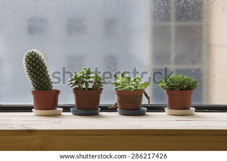 Cactuses in a small flower pots, raining day