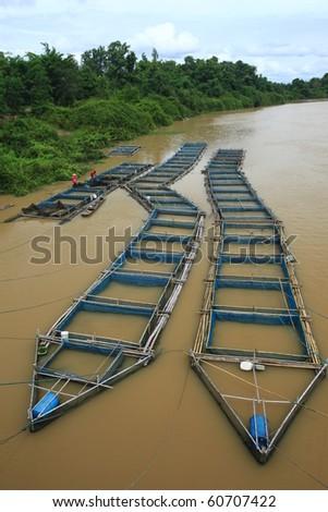 cage fish farming