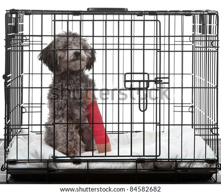Caged dog with broken leg in a cast
