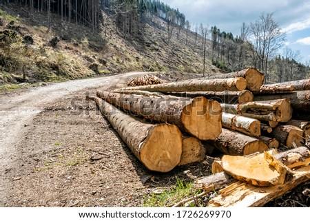 Calamity logging, Stolica mountains, Slovak republic. Forest calamity theme. Seasonal natural scene. Zdjęcia stock ©