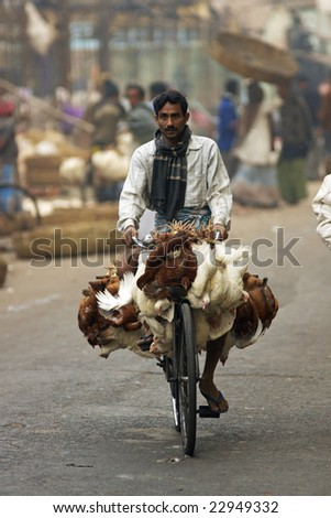 CALCUTTA, INDIA - DECEMBER 20: Man riding a bicycle loaded with chickens along a city street on December 20, 2008 in Calcutta, West Bengal, India.