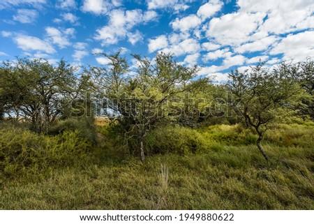 Calden forest landscape, La Pampa province, Patagonia, Argentina Foto stock ©