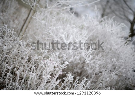 calendar picture with frozen hoarfrost in cold weather. German Wintertime.