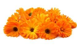 Calendula flower, marigold, herbs